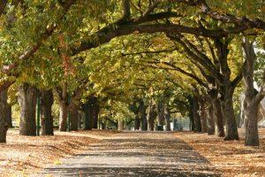 Walkway Carlton Gardens Melbourne Australia